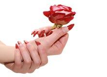kobiety ręk czerwień wzrastał Zdjęcia Royalty Free