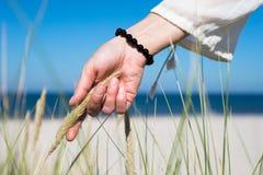 Kobiety ręka ono ślizga się przez wydmowej trawy na słonecznym dniu Obraz Stock