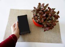 Kobiety ręka trzyma pustego ekranu smartphone komórkę Zdjęcie Royalty Free