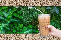 Kobiety ręka trzyma szklaną lukrową kawę na zielonej naturze i surowym kawowych fasoli tle Zdjęcie Royalty Free