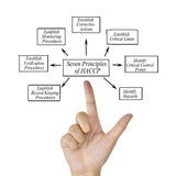 Kobiety ręka wskazuje element HACCP zasada na białym tle dla używać w produkci obrazy stock