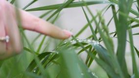 Kobiety ręka z diamentem na jej palcu, resets rosy krople z zieloną trawą zbiory wideo