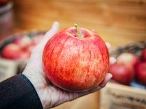 Kobiety ręka z dużym czerwonym jabłkiem Zdjęcie Stock
