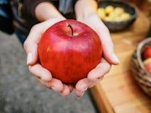 Kobiety ręka z dużym czerwonym jabłkiem Zdjęcie Royalty Free