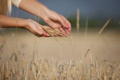 Kobiety ręka z kukurudzą Fotografia Royalty Free
