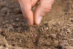 Kobiety ręki flancowania ziarna w ziemi w ogródzie fotografia stock