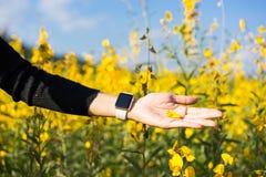 Kobiety ręki koloru żółtego wzruszający kwiaty Obrazy Royalty Free