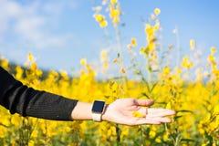 Kobiety ręki koloru żółtego wzruszający kwiaty Zdjęcie Royalty Free