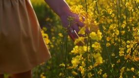 Kobiety ręki macanie kwitnie zbliżenie Dolly strzał zdjęcie wideo