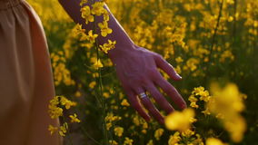 Kobiety ręki macanie kwitnie zbliżenie Dolly strzał zbiory
