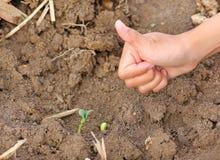 Kobiety ręki przedstawienia kciuk up dla Młodej bani obrazy stock