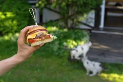 Kobiety ` s ręka z domowej roboty hamburgerem zdjęcia royalty free