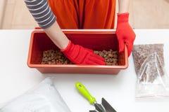 Kobiety ` s ręki w rękawiczkach nalewają drenaż i użyźniacz w plastikowego zbiornika Przygotowanie ziarna dla zasadzać w ziemi Zdjęcia Stock