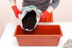 Kobiety ` s ręki w rękawiczkach nalewają ziemię w plastikowego zbiornika Przygotowanie ziarna pomidor i pieprz dla zasadzać w gro Zdjęcia Royalty Free