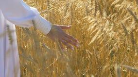 Kobiety ` s ręki zbliżenie Na polu z banatką zdjęcie wideo