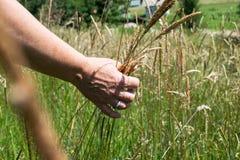 Kobiety ` s ręka dotyka trawy, ` natury czuciowy ` Zdjęcie Stock