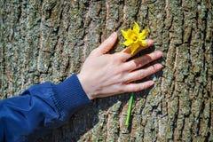 Kobiety ` s ręka z kwiatem na drzewie Obrazy Royalty Free