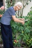 Kobiety starszy ogrodnictwo fotografia royalty free
