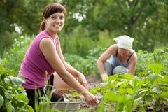 Kobiety target1300_1_ w jarzynowym ogródzie Obrazy Royalty Free