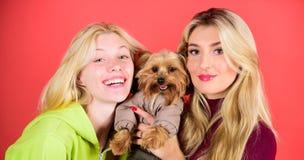 Kobiety uściśnięcia Yorkshire terier Yorkshire terier jest bardzo czule kochającym psem który pragnie uwagę fajny pies pet zdjęcie royalty free