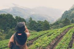 Kobiety use kamera brać obrazek strawberrry plantacja na mo Fotografia Stock