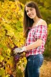 Kobiety winegrower Fotografia Royalty Free