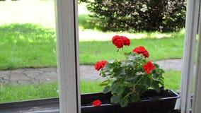 Kobiety wody kwiatu puszka zdjęcie wideo