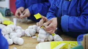 Kobiety wtykają metki na siatek torbach z czosnkiem zbiory