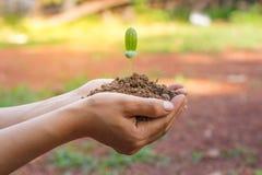 Kobiety zasadza drzewa tworzyć utrzymanie obrazy royalty free