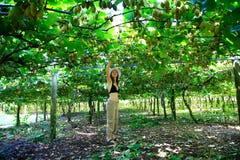 Kobiety zrywania kiwi od zadziwiającego sadu w Nowa Zelandia zdjęcie royalty free
