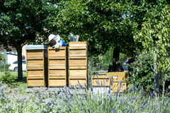 05 07 2017 Koblenz Niemcy - pszczelarka na roju dopatrywania pszczołach Pszczoły na honeycombs Ramy pszczoła rój Obraz Stock