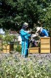 05 07 2017 Koblenz Niemcy - pszczelarki nauczania dzieciaki w roju dopatrywania pszczołach Pszczoły na honeycombs Ramy pszczoła r Obrazy Stock
