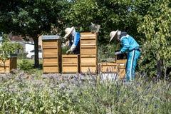 05 07 2017 Koblenz Tyskland - Beekeeper på hållande ögonen på bin för bikupa Bin på honungskakor Ramar av en bibikupa arkivbilder