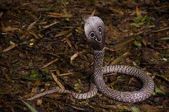kobra hindus Fotografia Stock