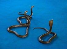 Kobra tre på matta Royaltyfria Bilder