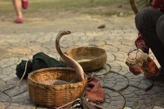 Kobra wąż Obrazy Royalty Free