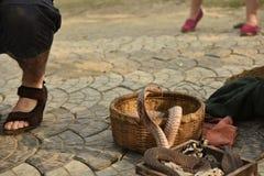 Kobra wąż Zdjęcie Stock