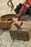 Kobra wąż Fotografia Stock
