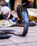 Kobra wąż w Jemaa el kwadracie Obraz Royalty Free