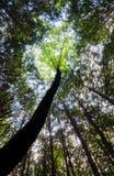 Koch Forest State Park stockbild
