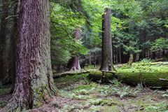 Koch Forest State Park Pennsylvania stockfotografie