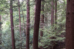 Koch Forest State Park Pennsylvania lizenzfreie stockfotos
