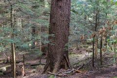 Koch Forest State Park Pennsylvania lizenzfreies stockbild