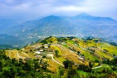 Kochał ryżowych pola fotografia royalty free