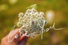 Kocham Ciebie Handwriting motto Na A fotografii obrazy royalty free