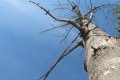 Kocham odgałęzienie i niebieskie niebo fotografia royalty free