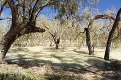 Kochana Rzeka, Australia Fotografia Royalty Free