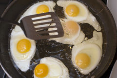Kochen der Spiegeleier Stockfotografie