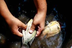 Kochen mit Fischen Lizenzfreies Stockbild