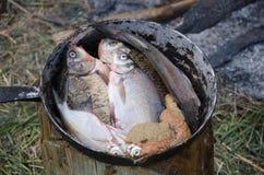 Kochen von Fischen in Feldzuständen stockbild